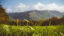 green grass and mountain view