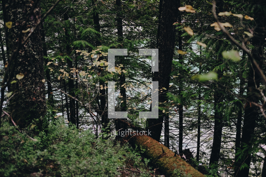 forest floor and riverbank