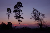 silhouette of trees in front of pink clouds during sunset