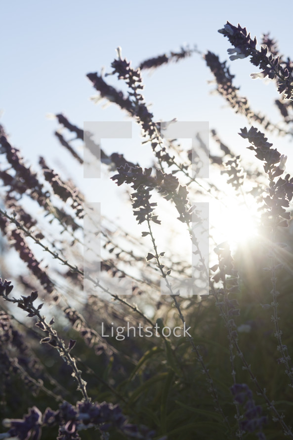 sunlight through wildflowers