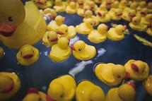 Lots of rubber duckies float in water