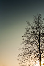 Silhouette of tree against sunset sky.
