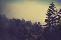 Clouds touching tree tops on top of a mountain, Landscape and nature, Grunge, Background, Camp, 