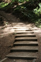 steps cut into dirt on a nature trail