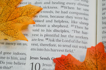 fall leaves on the pages of a Bible