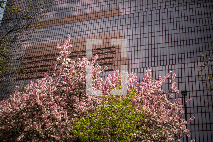 city buildings and spring flowers on a trees