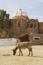 a donkey in front of a church in Jerusalem