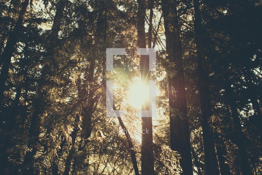 Prayer Mountain | Light Rays | Forest | Trees | Encounter | Sun Through Trees