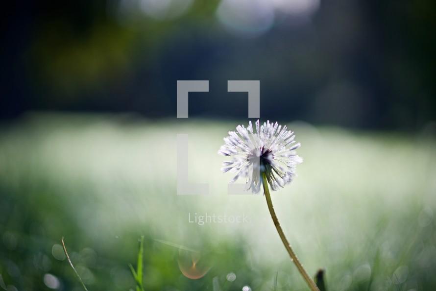closeup of a flower outdoors