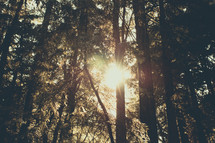 Prayer Mountain | Light Rays | Forest | Trees | Encounter | Sun Through Trees