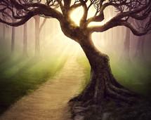 sunlight shining on a tree