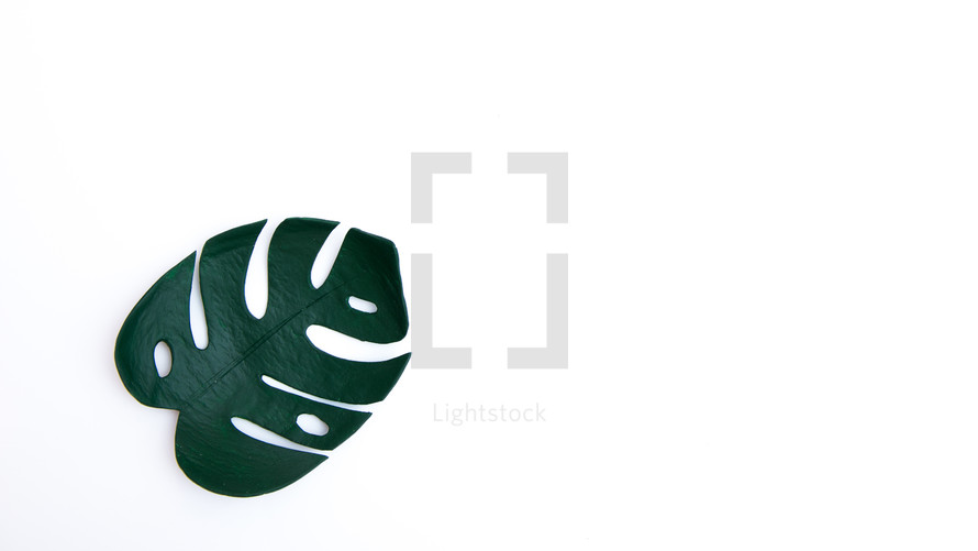 tropical monstera on a white background with copy space