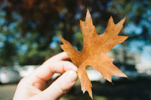 a person holding a fall leaf