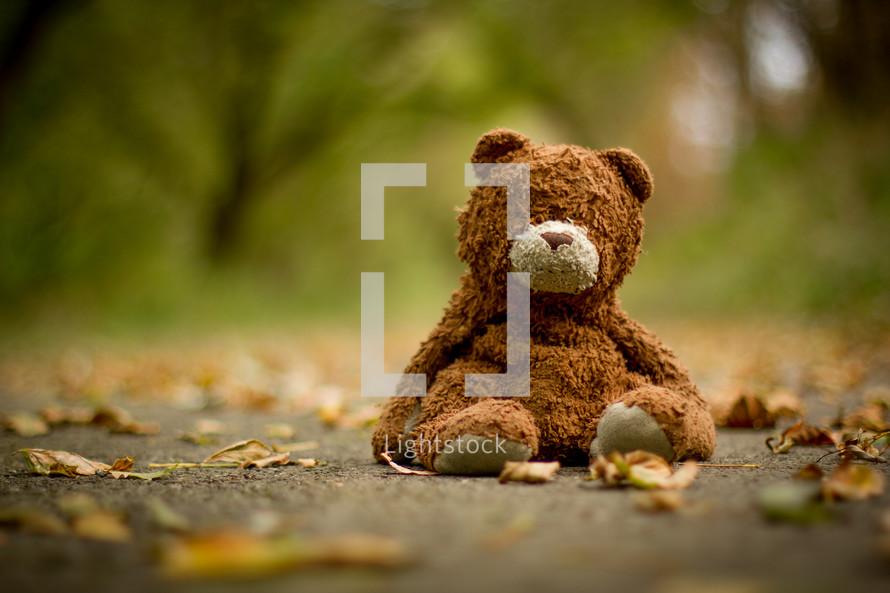 old teddy bear in leaves on a sidewalk