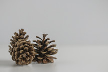 pine cones on a white background