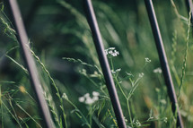 tall grass and bike rack
