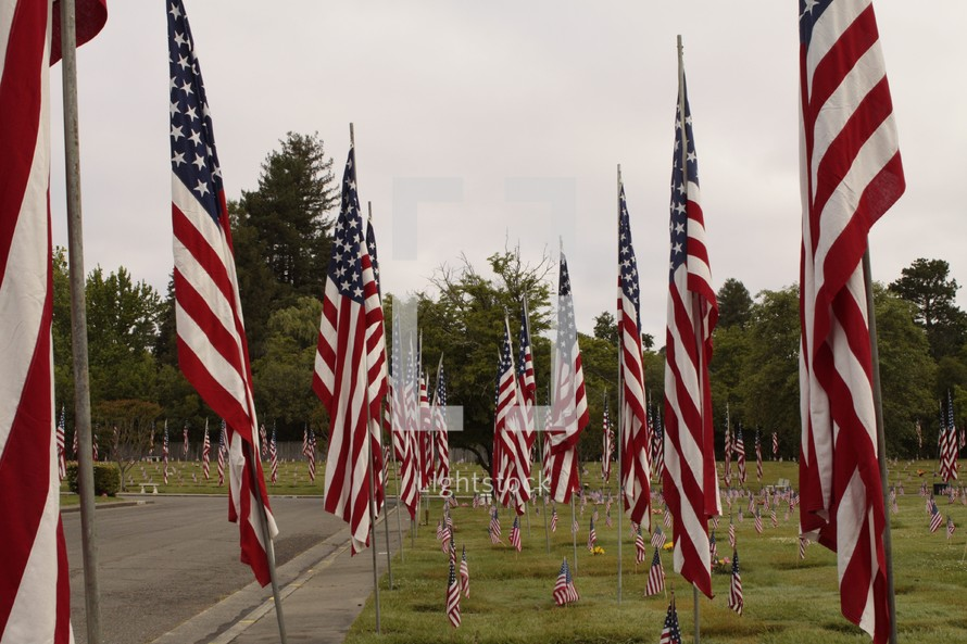 many American flags in a Veterans cemetery