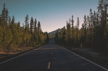 Long tree lined asphalt road | Journey | Mountain | Middle of the road