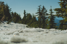 Close up of snow with trees in the background | Bokeh | Shallow |Defocused