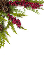 pine and red berries on a white background