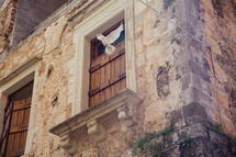 dove in front of a window with shutters