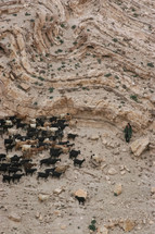 A shepherd with his goats on a mountainside