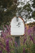 rusty mailbox and purple flowers