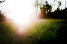 sunlight shining on green grass