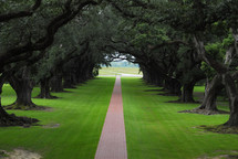 Oak trees lining a country plantation pathway