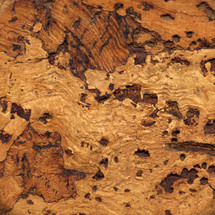Blank background with cork texture. Natural backdrop with a surface of the bark.