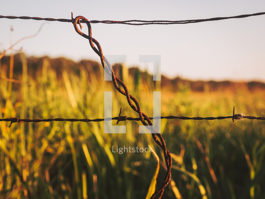 barbed wire in a field