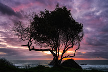 silhouette of a tree on Trinidad Beach at sunset