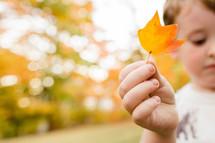 a boy holding a fall leaf