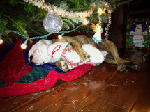 a puppy sleeping under a Christmas tree