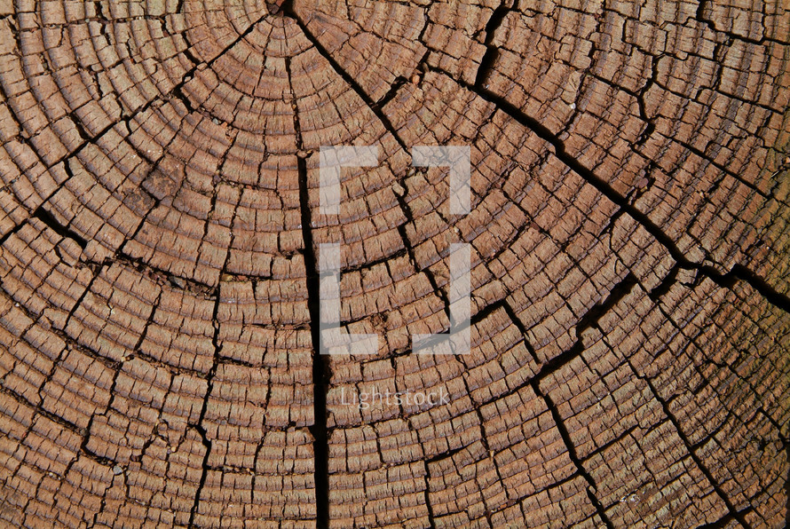 Closeup of tree stump