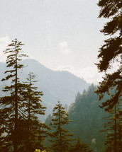 trees in a mountain forest