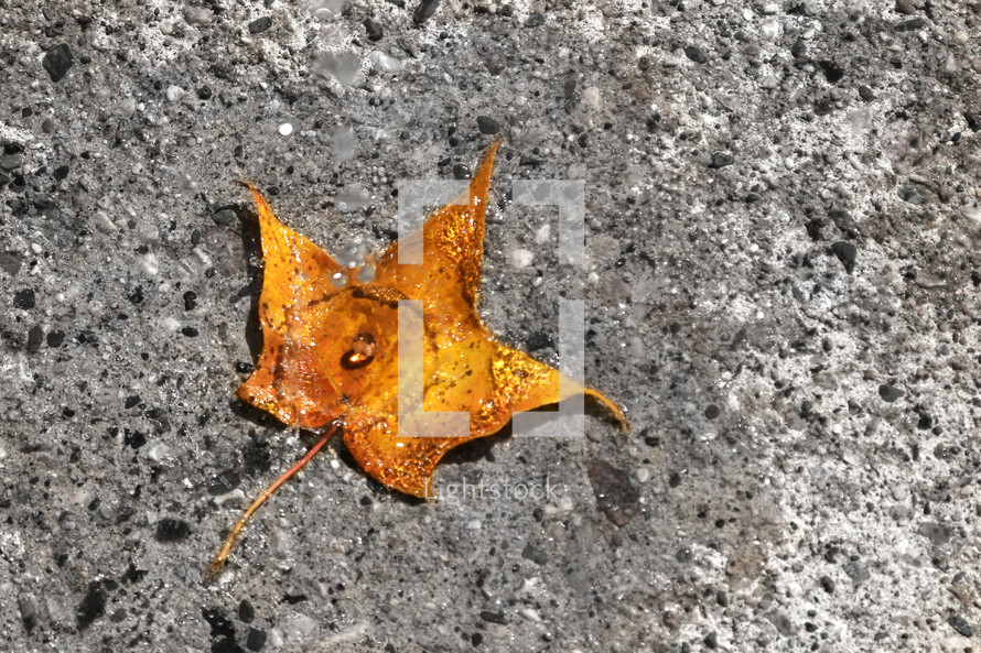leaf floating in a puddle and a drop of rain on top of it