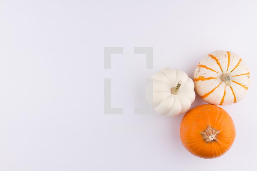 three pumpkins on a white background