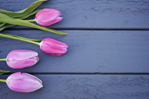 pink tulips on blue wood boards