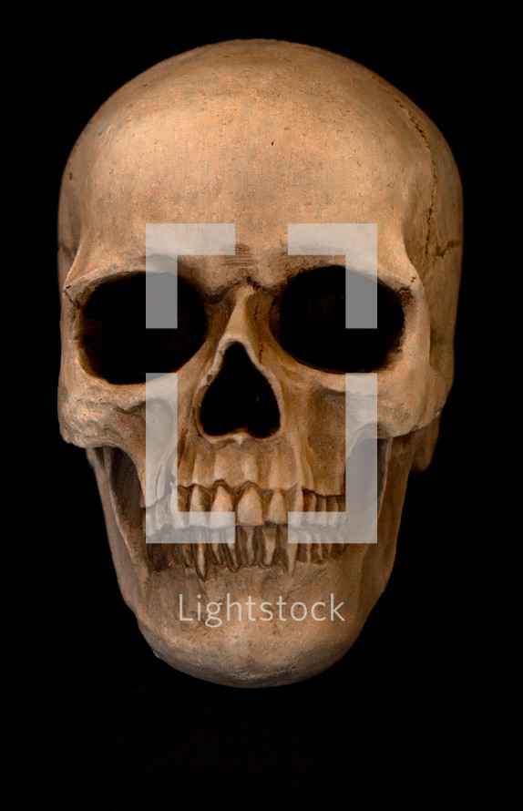Skull on a black background