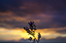 Silhouette of a plant under the sky at dusk.