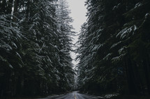winter highway lined by trees