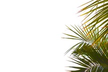 Palm frond border on a white background