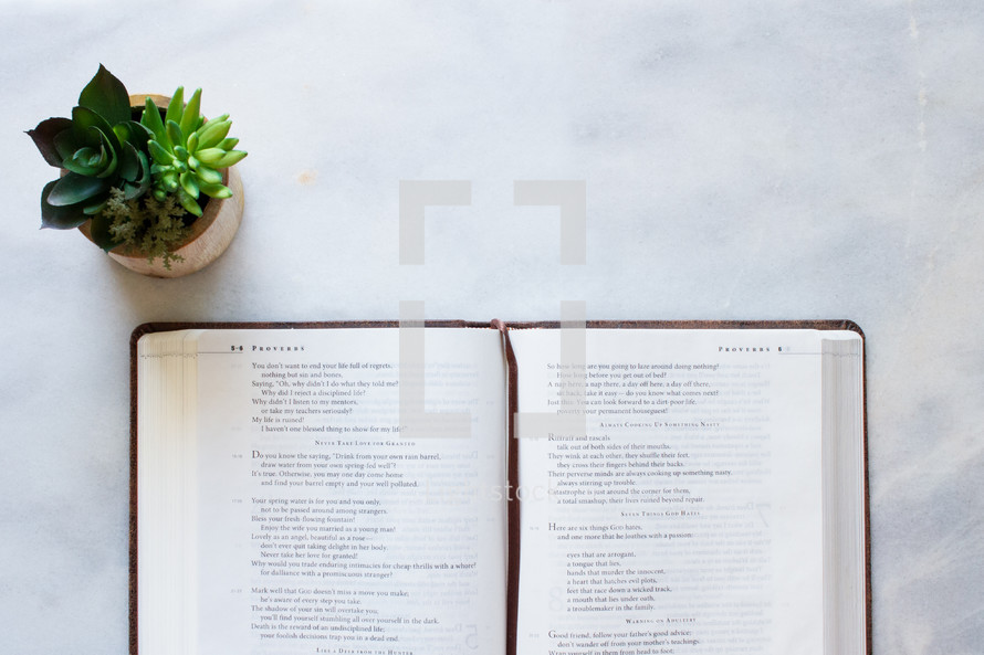 House plant and a Bible opened to Proverbs on a white marble surface