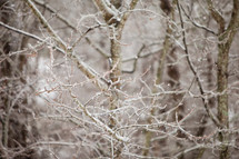 ice on branches in a forest