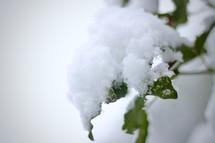 snow on a green leaf