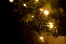 Clear Christmas tree lights on pine tree branch.