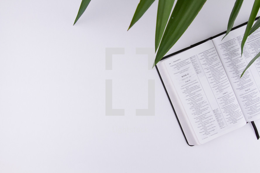 palm fronds and Bible on a white background