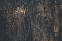 The granite face of El Capitan in Yosemite National Park