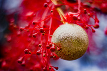 gold ornament on red branches